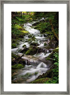 Forest Stream Framed Print
