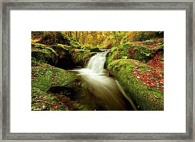Forest Stream Framed Print by Jorge Maia
