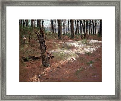Forest Stump Framed Print by Christopher Reid