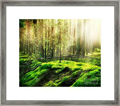 Forest Framed Print by Caio Caldas