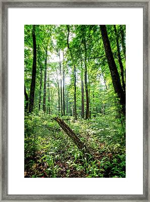 Framed Print featuring the photograph Forest Sun by Alan Raasch
