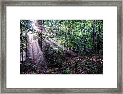 Forest Sunbeams Framed Print