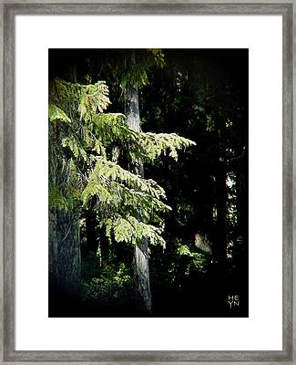 Forest Sunlight - 1 Framed Print