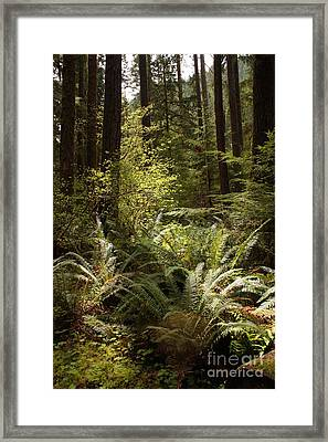 Forest Sunlight And Shadows  Framed Print by Carol Groenen