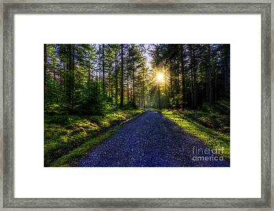 Framed Print featuring the photograph Forest Sunlight by Ian Mitchell