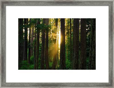 Forest Sunset Framed Print