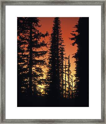 Forest Sunset Framed Print by Leland D Howard