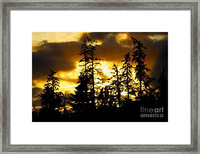 Framed Print featuring the photograph Forest Sunset  by Nick Gustafson