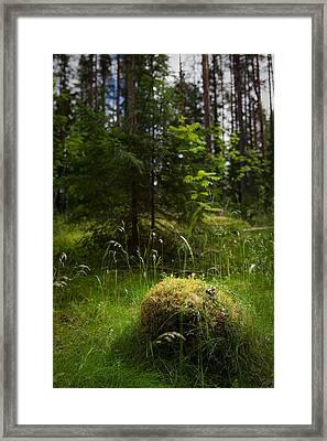 Forest Tales Framed Print by Konstantin Dikovsky