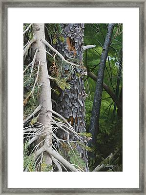 Forest Textures Framed Print by Wendy Ballentyne