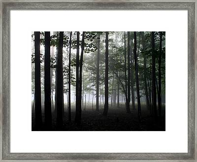 Forest Through The Trees Framed Print by Doug Hockman Photography