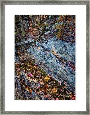 Forest Tidal Pool In Granite, Harpswell, Maine  -100436-100438 Framed Print