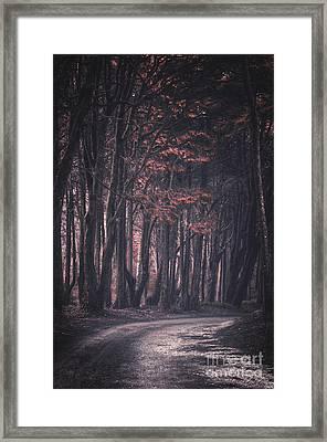 Forest Trail Framed Print by Carlos Caetano