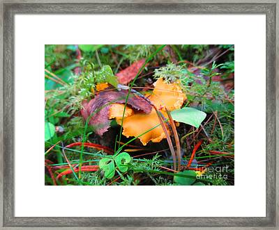 Forest Treasure Framed Print by Martin Howard