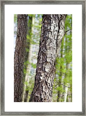Framed Print featuring the photograph Forest Trees by Christina Rollo