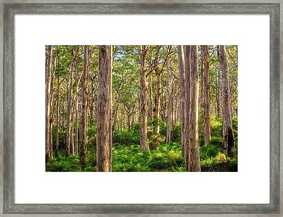 Framed Print featuring the photograph Forest Twilight, Boranup Forest by Dave Catley