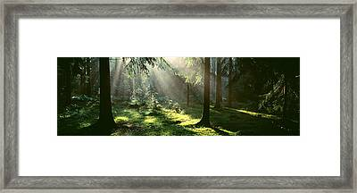 Forest Uppland Sweden Framed Print