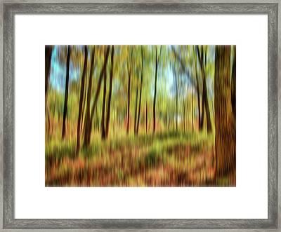 Forest Vision Framed Print