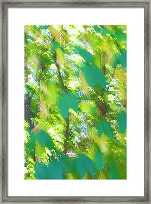 Forest Walk #1 Framed Print by Linda Bickerton-Ross