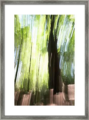 Forest Walk #2 Framed Print by Linda Bickerton-Ross
