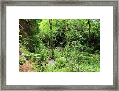 Framed Print featuring the photograph Forest Walk by Aidan Moran