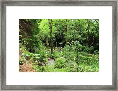 Forest Walk Framed Print by Aidan Moran