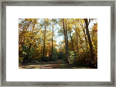 Framed Print featuring the photograph Forest Walk by Joseph G Holland