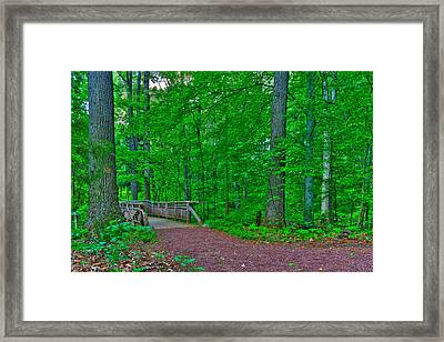 Forest Walk Framed Print by Kevin Hill