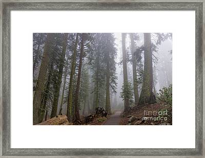 Framed Print featuring the photograph Forest Walking Path by Peggy Hughes
