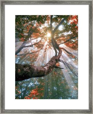 Forest With Fog And Sun Rays Framed Print