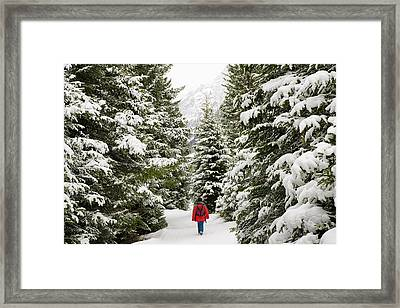Forest With Snow Covered Trees In Austria Framed Print