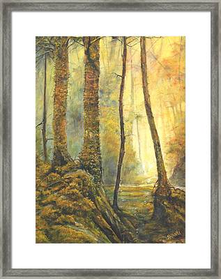Forest Wonderment Framed Print by Craig shanti Mackinnon