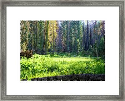 Foresta Framed Print