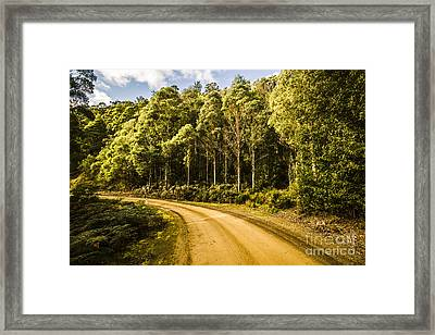 Forestry Trails And Scenic Routes Framed Print