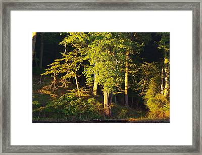 Forests Edge Framed Print