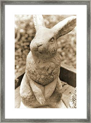 Forever Buck Bunny Framed Print by JAMART Photography