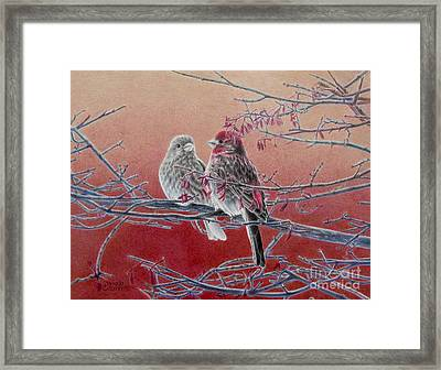 Forever Finch Framed Print by Pamela Clements