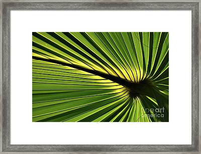 Forever Fronds Framed Print
