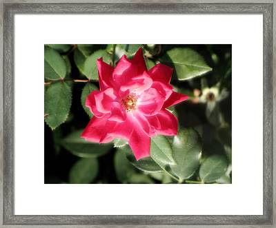 Forever Glow Framed Print by Rebecca Poole