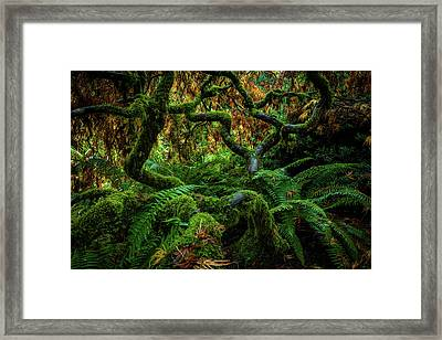 Forever Green Framed Print