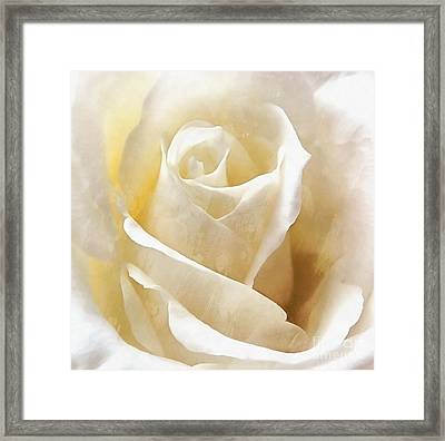 Framed Print featuring the photograph Forever More - Ivory Rose by Janine Riley