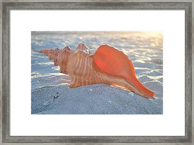 Framed Print featuring the photograph Forever Sanibel by Melanie Moraga