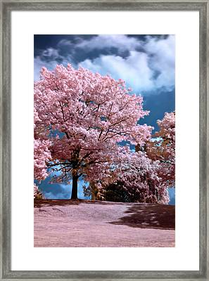 Framed Print featuring the photograph Forever Spring by Helga Novelli
