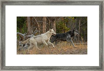 Forever Wild Framed Print by Sandy Sisti