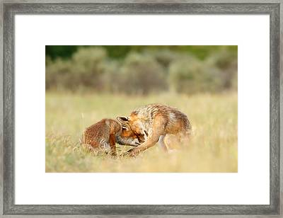 Foreverandeverandever - Red Fox Love Framed Print by Roeselien Raimond