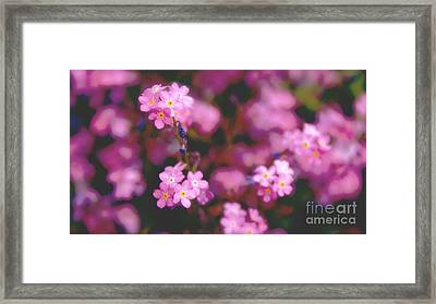 Forget Me Not Framed Print by Louise Fahy