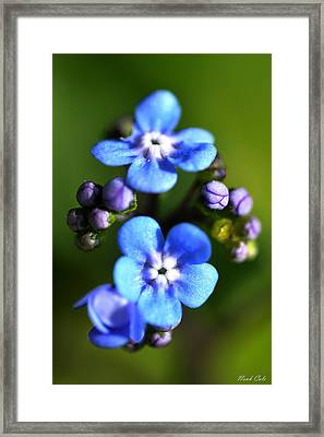 Forget-me-not Framed Print by Noah Cole