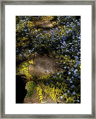 Framed Print featuring the painting Forget-me-nots 1 by Renate Nadi Wesley