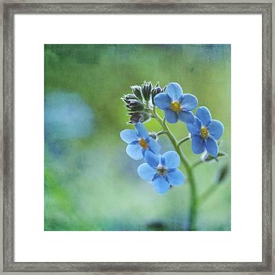 Forget-me-nots Flower Framed Print