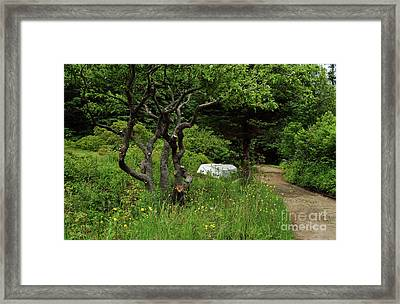Forgotten Path Framed Print
